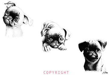 The BRUSSELS GRIFFON SERIES by John Flores